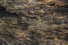 Árbol de corteza Imagenes de archivo
