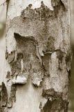 Árbol de corteza para el fondo Imagen de archivo