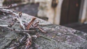 Árbol de corteza secado en la cerca concreta imagen de archivo libre de regalías