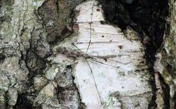 Árbol de corteza texturizado liquen del musgo de la corteza Imagenes de archivo