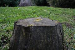 Árbol de Cutted Fotografía de archivo