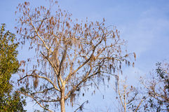 Árbol de Cypress Foto de archivo
