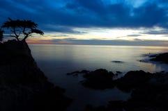 Árbol de Cypress en la puesta del sol Imagenes de archivo