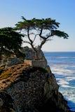 Árbol de Cypress solitario Imagenes de archivo