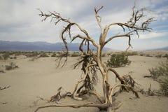 Árbol de Death Valley Fotos de archivo libres de regalías