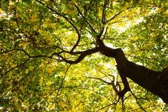 Árbol de debajo imagen de archivo