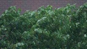 Árbol de doblez en tormenta de la lluvia almacen de metraje de vídeo