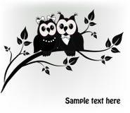 Árbol de dos búhos Fotos de archivo libres de regalías