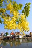 Árbol de ducha de oro delante del templo. Imagenes de archivo