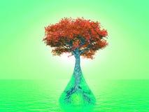 Árbol de Eco Imagen de archivo