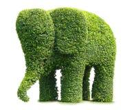 Árbol de elefante Imagen de archivo libre de regalías