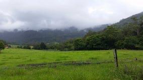 Árbol de eucalipto brumoso de la mañana, campo cerca de Jamberoo Nuevo Gales del Sur imagen de archivo