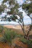 Árbol de eucalipto con la vista de los rangos del Flinders imágenes de archivo libres de regalías