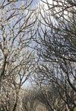 Árbol de familia Fotos de archivo