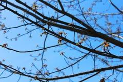 Árbol de florecimiento Imagen de archivo