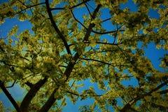 Árbol de flores Imagenes de archivo