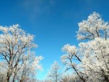 Árbol de Frosten Fotografía de archivo libre de regalías
