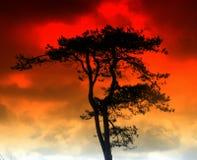 Árbol de fuego Imágenes de archivo libres de regalías