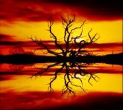 Árbol de fuego Fotografía de archivo libre de regalías