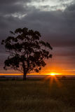 Árbol de goma en la puesta del sol, Sunbury, Victoria, Australia, diciembre de 2016 Fotografía de archivo libre de regalías