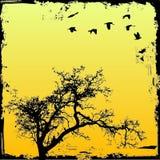 Árbol de Grunge con el fondo Fotografía de archivo libre de regalías