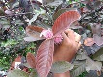 Árbol de Guaua Fotografía de archivo