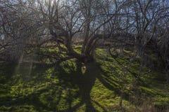 Árbol de hadas Fotos de archivo