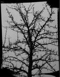Árbol de Halloween Imágenes de archivo libres de regalías