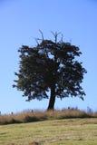 Árbol de haya en una colina Imágenes de archivo libres de regalías