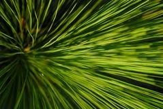 Árbol de hierba Foto de archivo libre de regalías