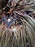 Árbol de hierba después del fuego fotos de archivo