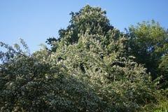 Árbol de hoja caduca imagenes de archivo