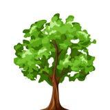 Árbol de hoja caduca aislado en blanco Ilustración del vector Foto de archivo