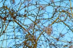 Árbol de hoja caduca en el invierno Imágenes de archivo libres de regalías