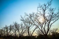 Árbol de hoja caduca en el verano 2 Fotografía de archivo libre de regalías