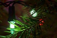 Árbol de hoja perenne 2 de la luz verde imagenes de archivo