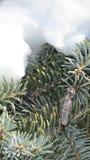Árbol de hoja perenne y nieve Fotos de archivo