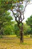 Árbol de hueco anaranjado Imagen de archivo libre de regalías