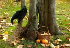 Árbol de hueco y un sombrero de la bruja Foto de archivo