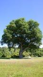 Árbol de Hugh en el jardín de Bodnant fotos de archivo