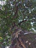 Árbol de Jack de la parte inferior a rematar a través de la lente imagenes de archivo