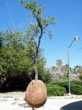 Árbol de Jaffa sobre la tierra 2011 Foto de archivo
