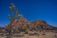 Árbol de Joshua bajo las estrellas Fotografía de archivo libre de regalías