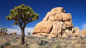 Árbol de Joshua y formaciones de roca Fotos de archivo libres de regalías