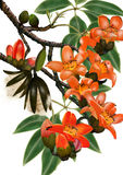 Árbol de Kapok Imágenes de archivo libres de regalías