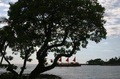 Árbol de Kona Imagenes de archivo