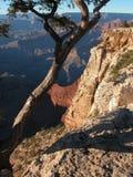 Árbol de la barranca magnífica Fotografía de archivo
