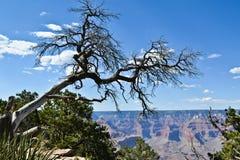 Árbol de la barranca magnífica Fotos de archivo