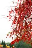 Árbol de la bendición Imágenes de archivo libres de regalías