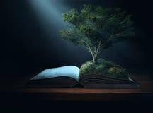Árbol de la biblia imágenes de archivo libres de regalías